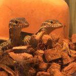 【爬虫類ブーム】爬虫類の魅力とは?飼おうぜトカゲ&ヘビ&カメ!