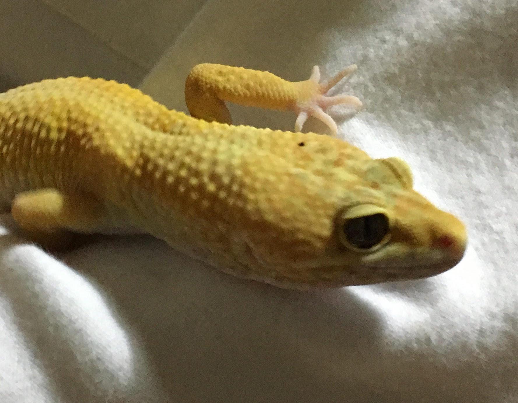爬虫類の飼育における『簡単』という言葉の意味と新規飼育者について考えてみた