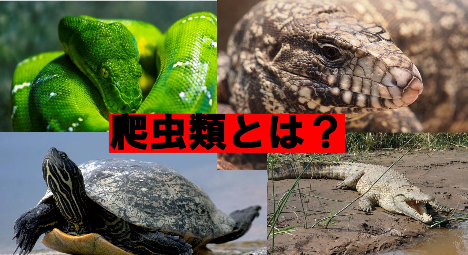 ペット飼育の基礎講座『爬虫類』とは?/人気のおすすめ種類も紹介