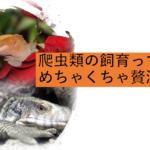 爬虫類の飼育=贅沢な趣味って話